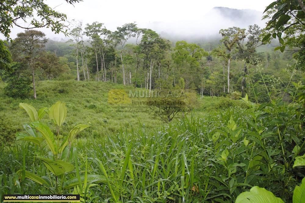 Finca en Venta a crédito bañada en agua sector Logroño Macas - Ecuador
