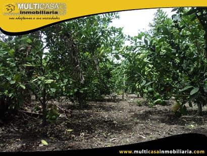 Terreno en Venta para cultivo a Crédito Sector Yunguilla - Ecuador
