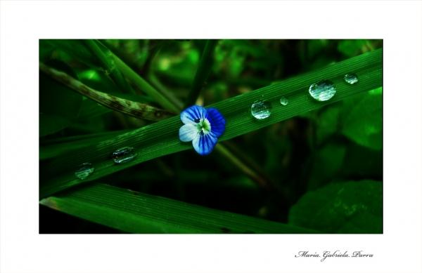 Drops and green .- MacroFotografia