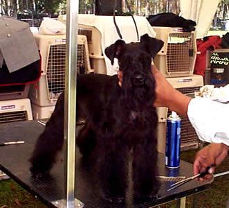 Exposición Canina en Cuenca .- La elección del nombre es importante, si es corto mejor, el cachorro debe aprender a ser llamado por su nombre y responder a éste.