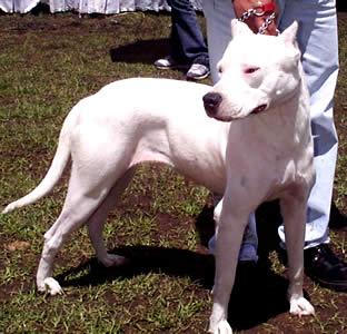 Exposición Canina en Cuenca .- No dejarlo dominar, el debe asumir su rol en el hogar: es el animal de compañía.