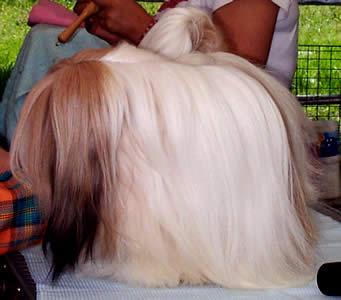 Exposición Canina en Cuenca .- Durante el primer año, el cachorro se desarrolla  internamente y necesita nutrientes adicionales. Por esta razón, un cachorro come mayor cantidad de alimento en la etapa del crecimiento.