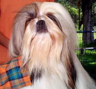 Exposición Canina en Cuenca .- En cuanto a la periodicidad, un cachorro debe comer de 4 a 3 veces por día. Se reduce a 2 o 3 veces al día cuando cumple los 6 meses de edad.