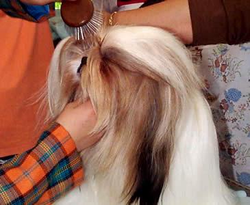 Exposición Canina en Cuenca .- Es muy importante que el cachorro tenga siempre a su disposición un recipiente con agua fresca.