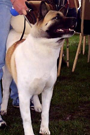 Exposición Canina en Cuenca .- Asegúrese de tener los elementos necesarios para el cuidado del perro. Estos varían según el largo del pelaje de su cachorro.