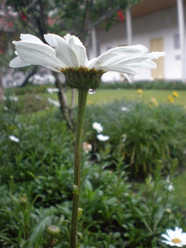 Flor y Agua .- En una tarde tranquila pero lluviosa en el museo de arte moderno....