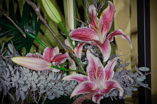 Exposición de Orquideas .- La Asociacion de Orquidiologia y Ecuagenera realizaron una exposición de Orquideas, Bonsails y diferentes plantas y flores donde cientos de espectadores amantes de las plantas visitaron el centro de convenciones del Aeropuerto Mariscal Lamar.