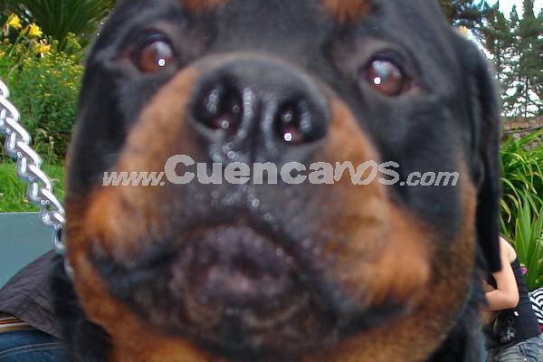 Exhibición Canina Pro plan Cuenca 2008