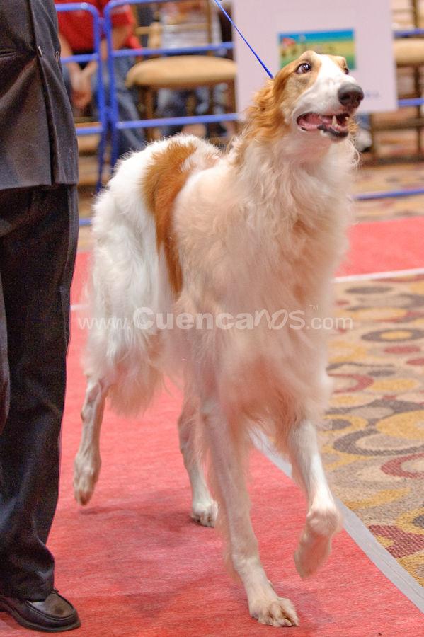 Exposición Canina Nacional e Internacional Cuenca 2009