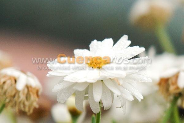 Flores (Fotografía Artística)